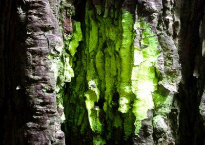 """""""Green Columns"""""""