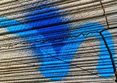 """Blue Bow"""