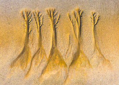 """""""Sandbäume 10"""""""