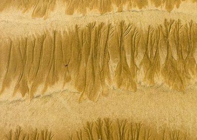 """""""Sandbäume 15"""""""