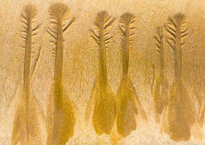"""""""Sandbäume 17"""""""