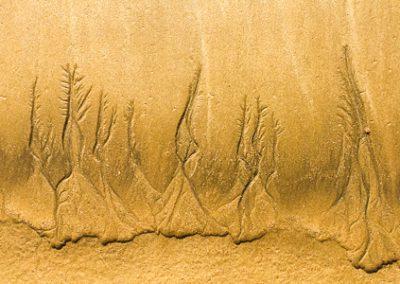 """""""Sandbäume 19"""""""