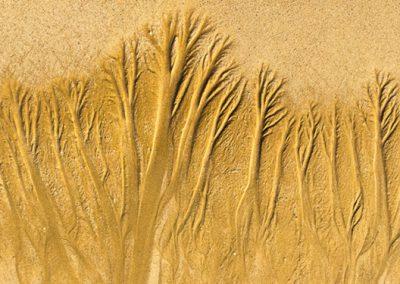 """""""Sandbäume 1"""""""