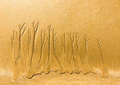 """""""Sandbäume 20"""""""