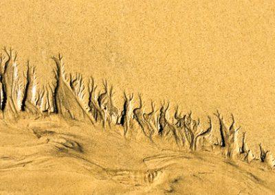 """""""Sandbäume 23"""""""