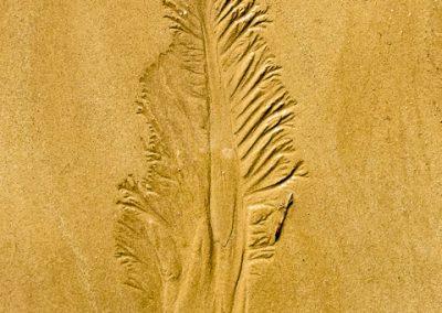 """""""Sandbäume 27"""""""