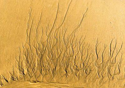 """""""Sandbäume 36"""""""