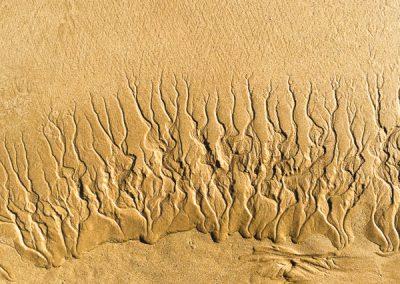 """""""Sandbäume 37"""""""