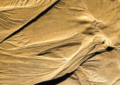 """""""Sandbäume 38"""""""