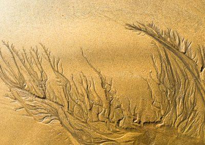 """""""Sandbäume 40"""""""