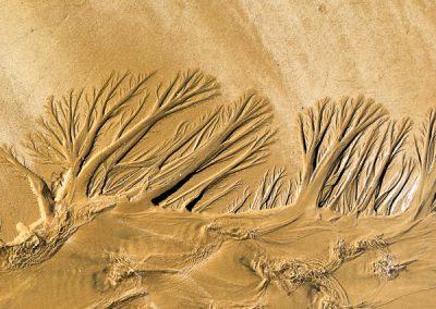 """""""Sandbäume 41"""""""
