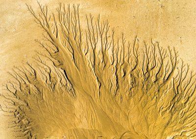 """""""Sandbäume 44"""""""