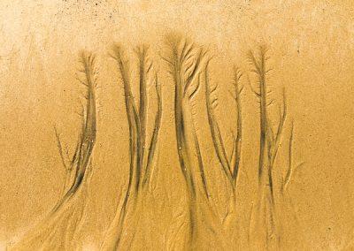 """""""Sandbäume 46"""""""