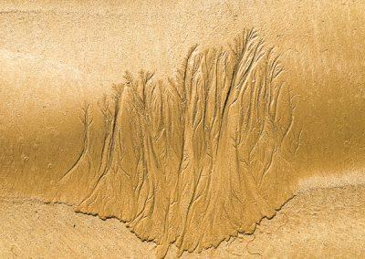 """""""Sandbäume 47"""""""