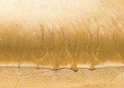 """""""Sandbäume 48"""""""