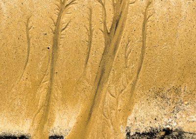"""""""Sandbäume 49"""""""