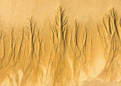 """""""Sandbäume 4"""""""