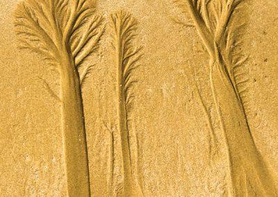 """""""Sandbäume 52"""""""