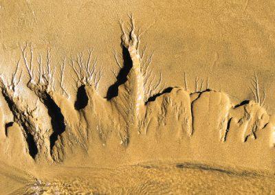 """""""Sandbäume 55"""""""