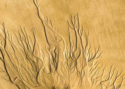 """""""Sandbäume 62"""""""