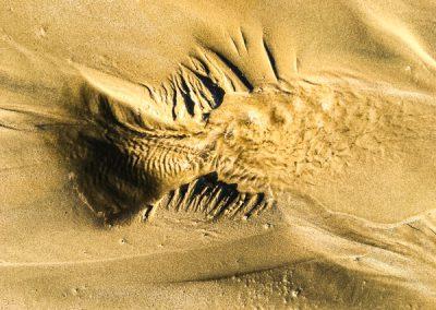 """""""Sandbäume 70"""""""