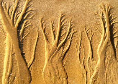 """""""Sandbäume 71"""""""
