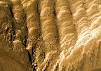 """""""Sandbäume 74"""""""