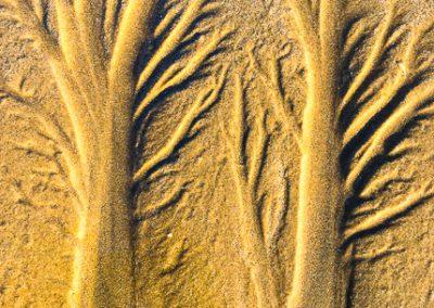 """""""Sandbäume 7"""""""