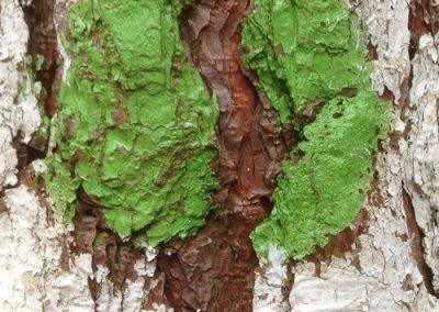 """Green Tree"""